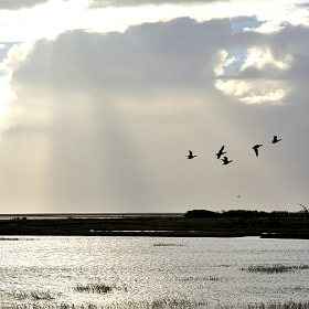 Pagham harbour by Kevin  Keatley (kevinkeatley)) on 500px.com