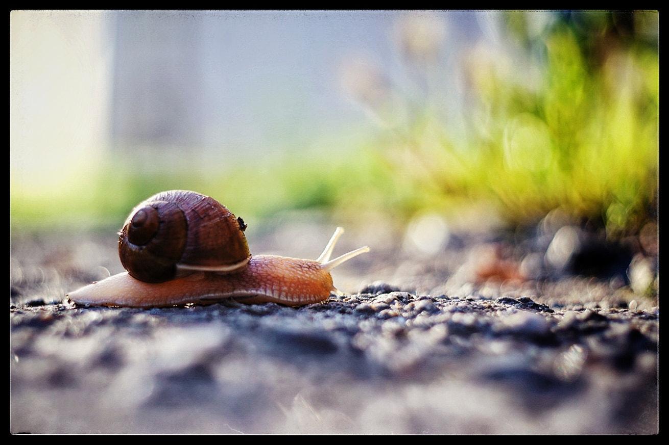 Snail..