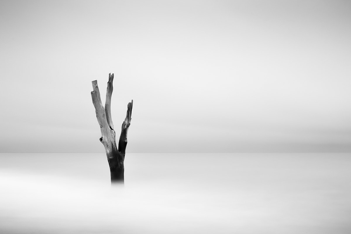 Photograph The Last Tree by Jeff Vyse on 500px