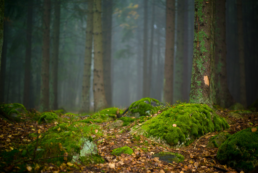 Photograph Mossy Forest by Henning Nilsen on 500px
