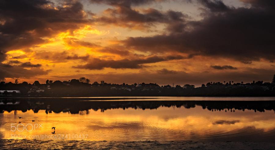 morning light of Panmure Basin