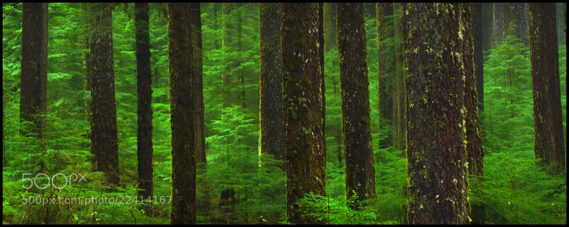 Photograph Olympic Rain Forest by Dustin Penman on 500px