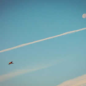 #luna #pajaro #farola #cielo #nubes #paisaje #naturaleza #salamanca #moon #bird #streetlight #sky...