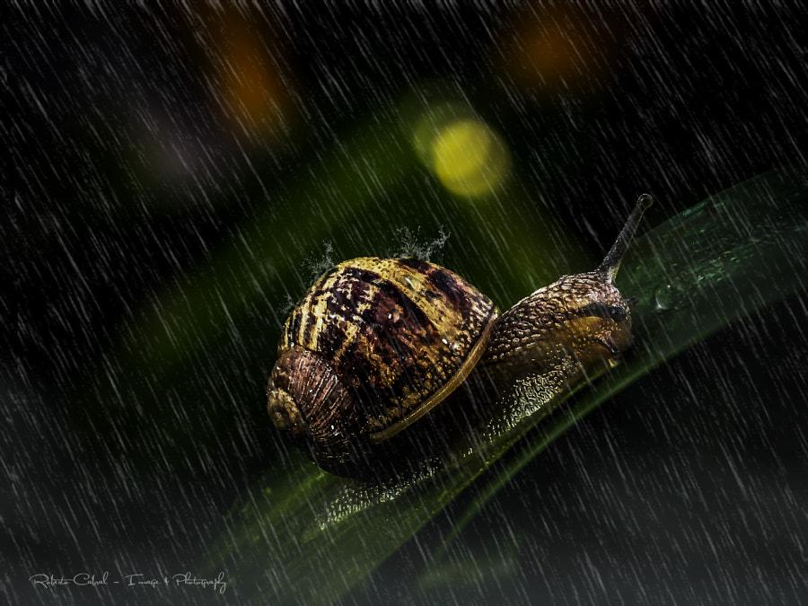 Beyond a dream de Roberto Cabral │Image & Photography en 500px.com