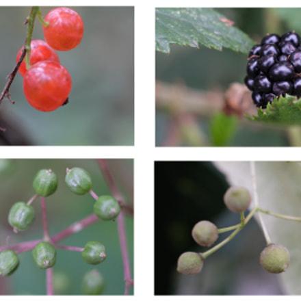 Wood fruits