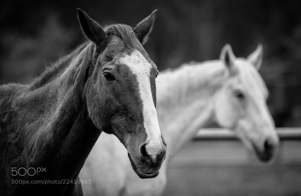 Photograph Horses of a general by Kaiji Sun on 500px