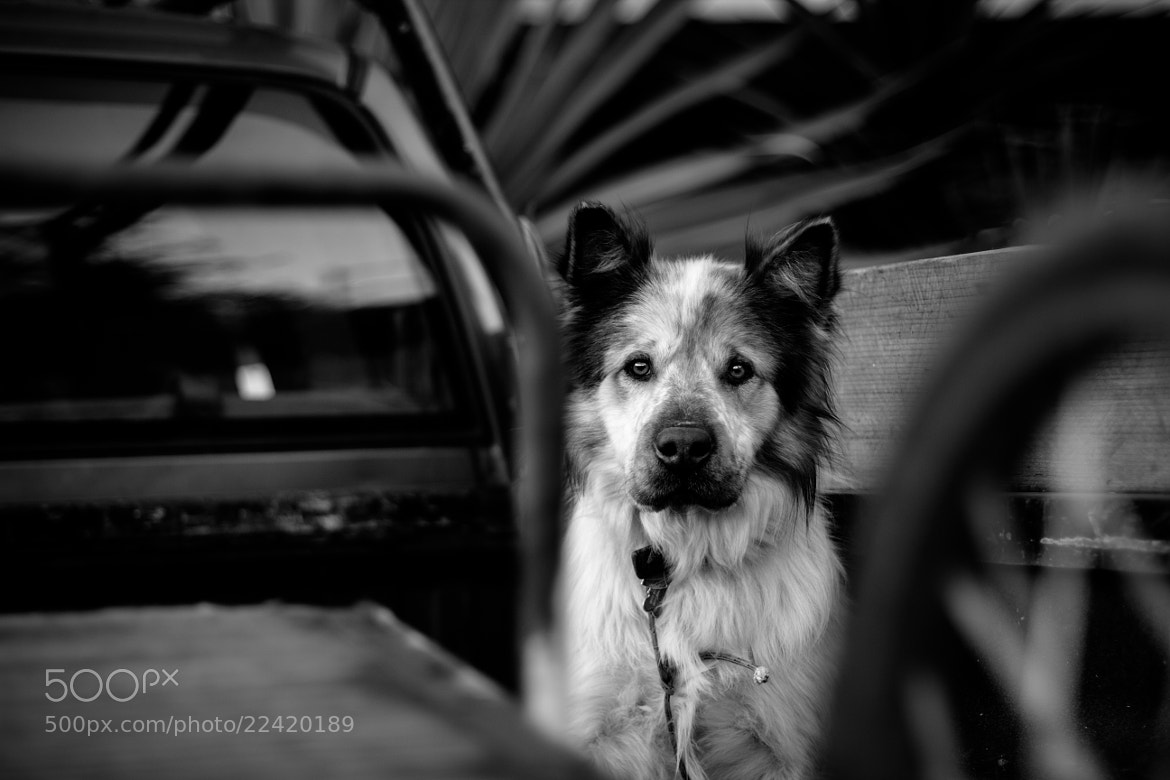 Photograph Truck Dog by Chris Michel on 500px