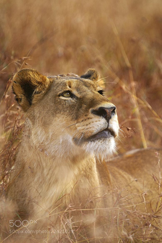 Photograph Leopard Spotting by Rudi Hulshof on 500px