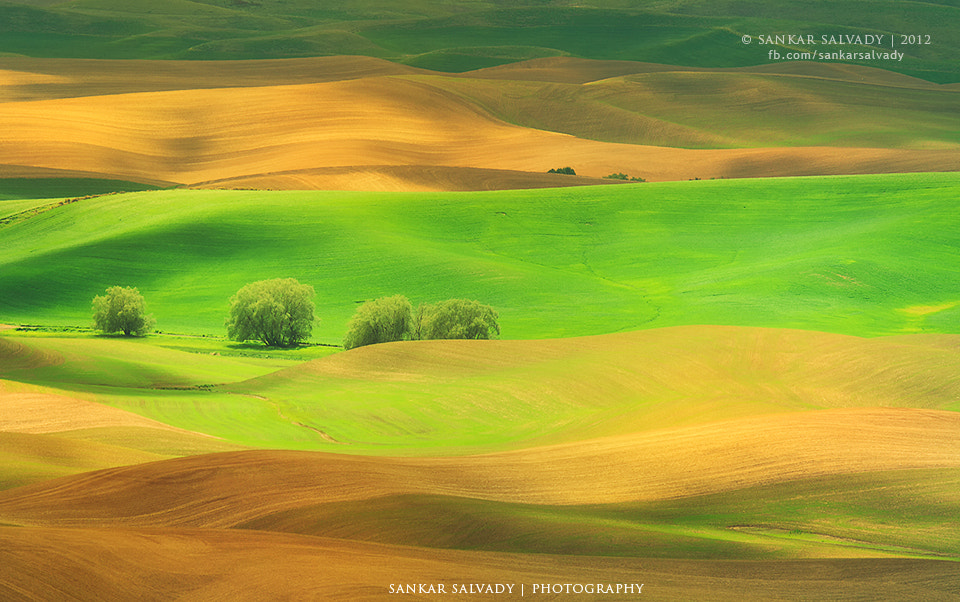 Photograph Gold-n Green land by Sankar Salvady on 500px