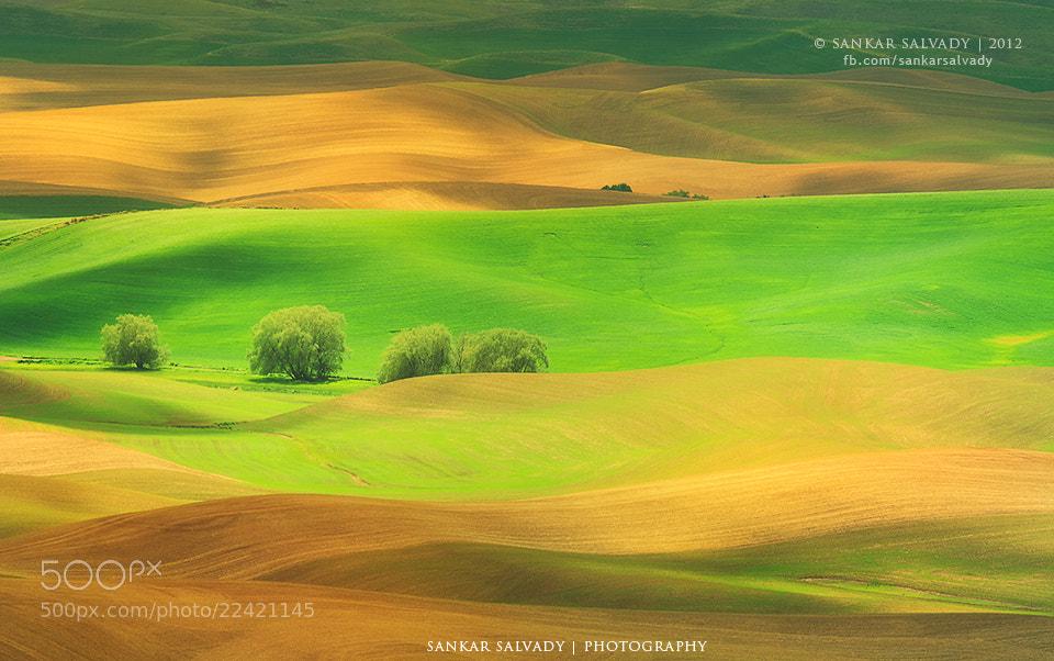 Photograph Gold-n Green land by Sankar Salvady on 500px