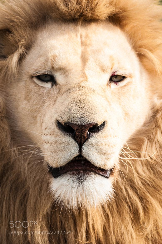 Photograph Pride by Cameron Zohoori on 500px