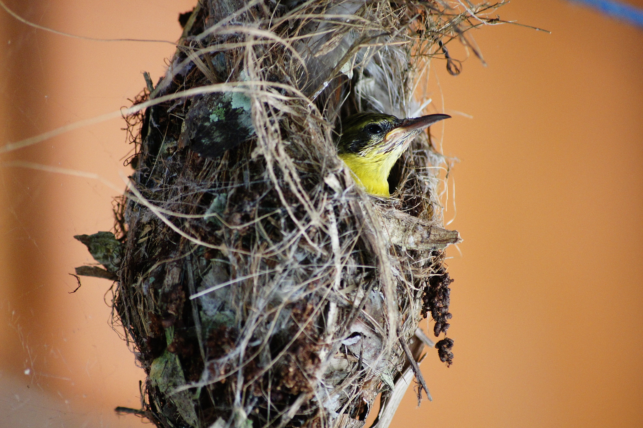 Photograph Bird In The Nest by Fajrul Azzem on 500px