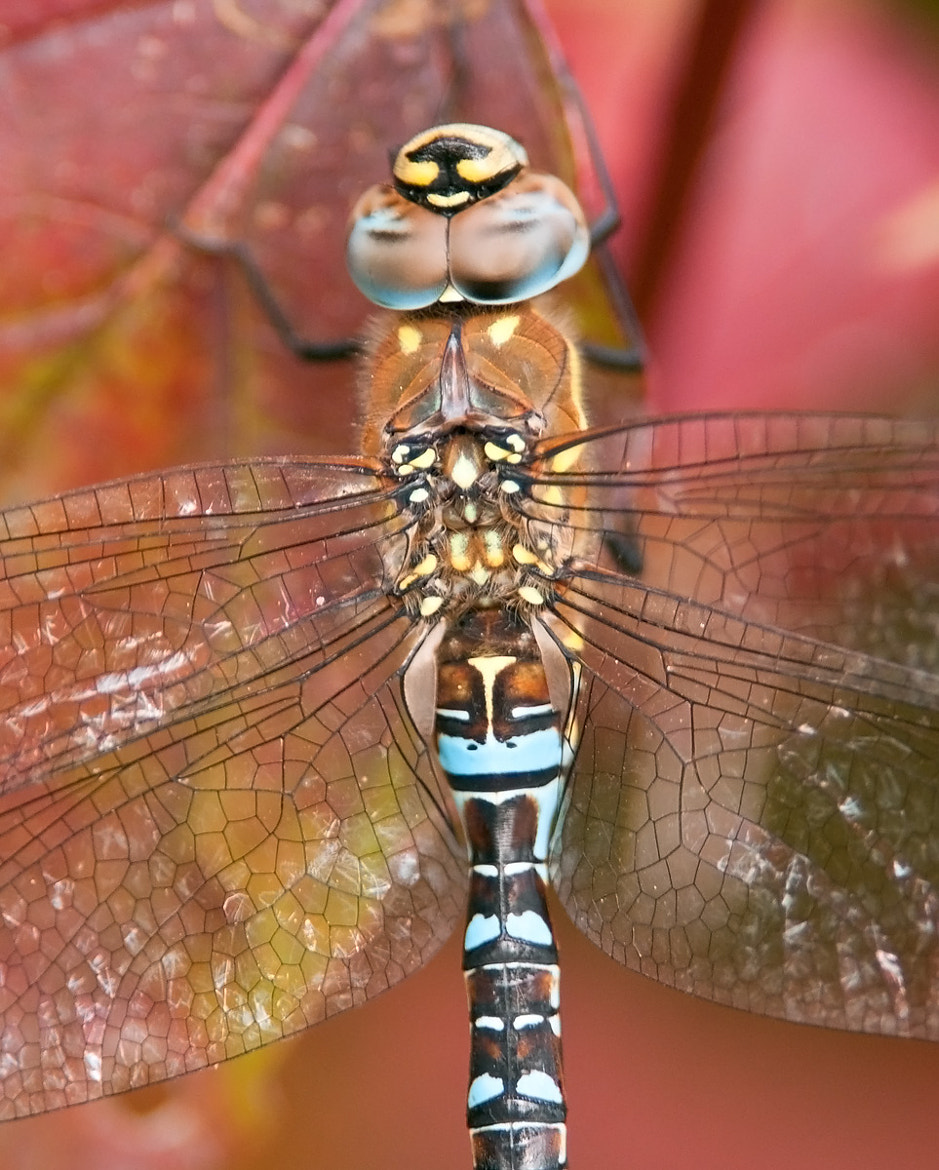 Photograph Migrant Hawker by Oscar Dewhurst on 500px