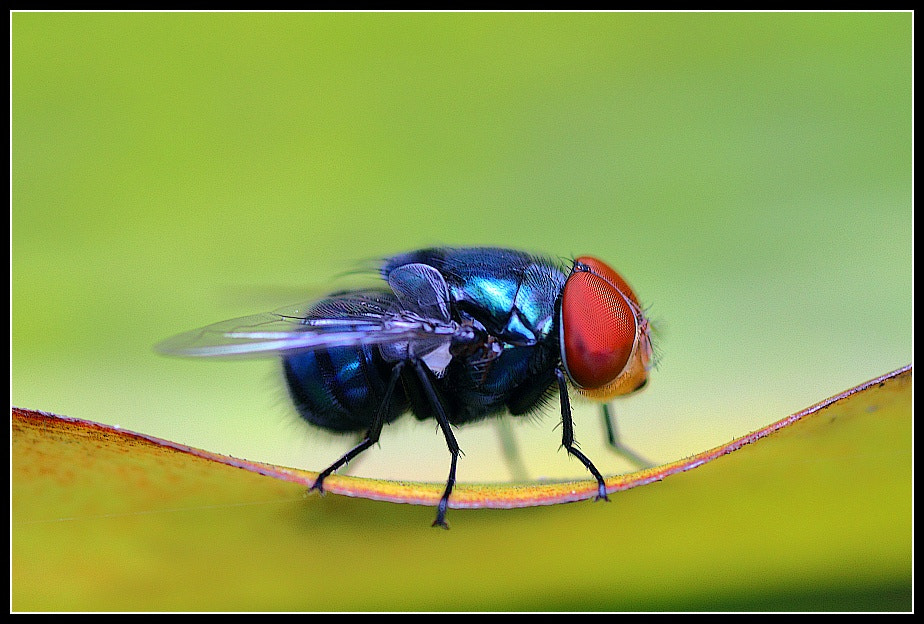 Photograph Resting fly by Paul M on 500px