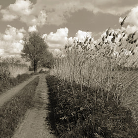 Way by Lubomir Marcak (lmarcak)) on 500px.com