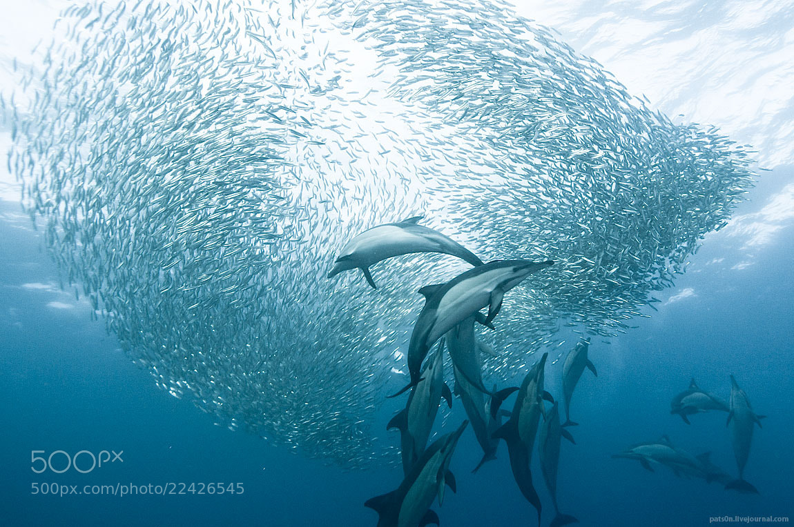 Photograph sardine wars ep. IX by Alexander Safonov on 500px
