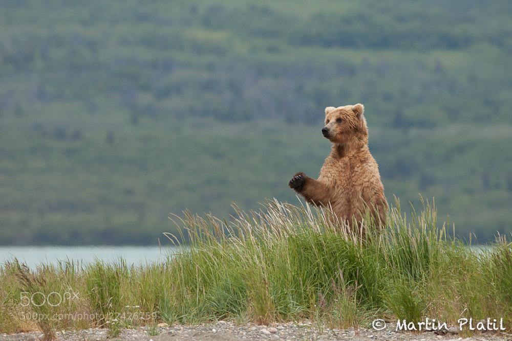 Photograph Good Bay Alaska by Martin Platil on 500px