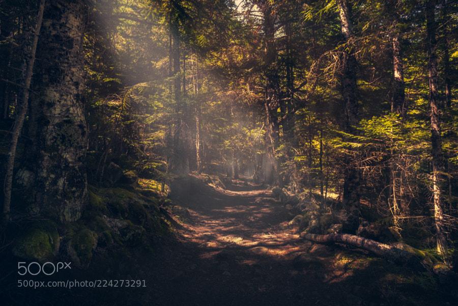 bosc raxos