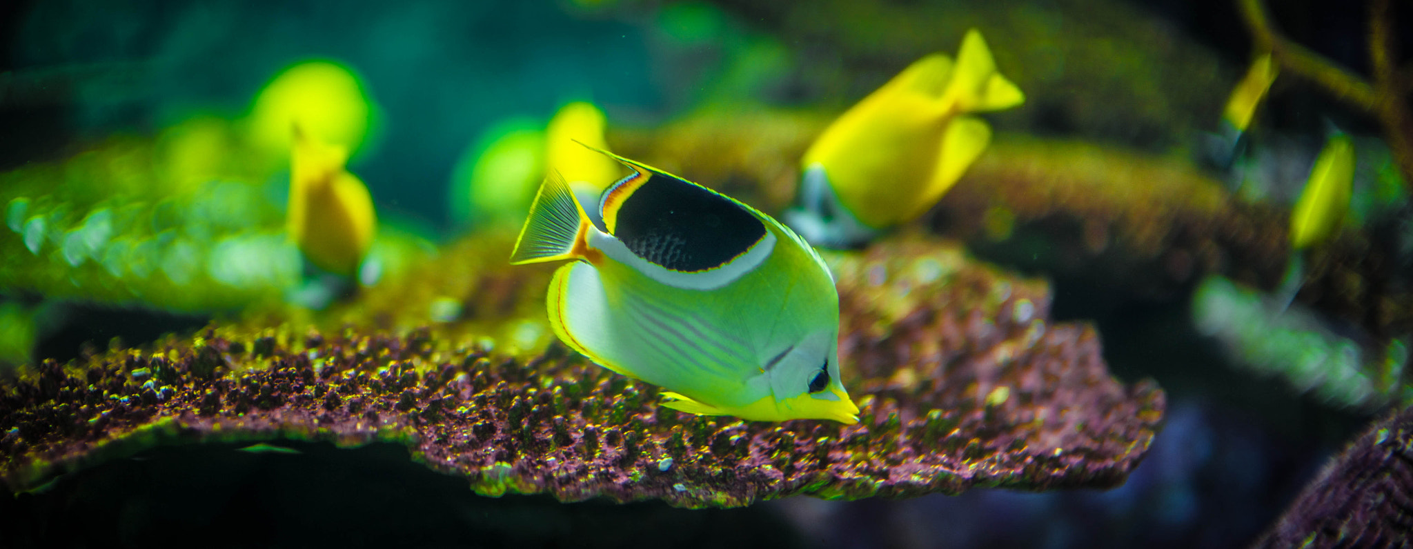 Photograph Yellow Fish by Tem Erdenebat on 500px