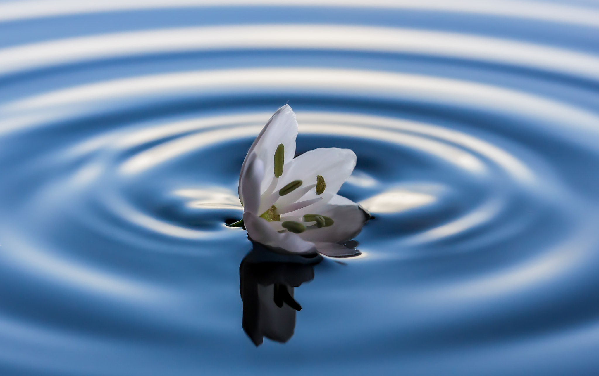 Photograph And ripples by Miki Asai on 500px