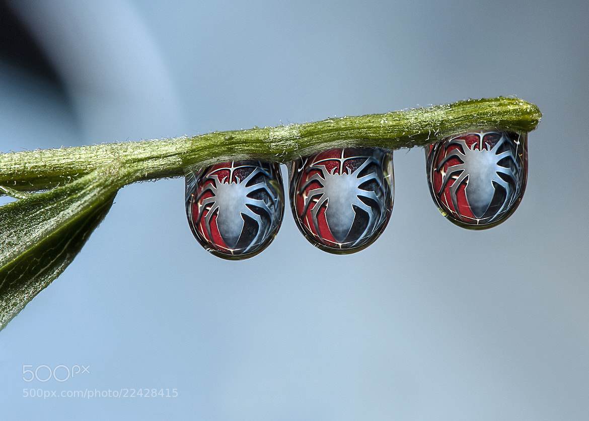 Photograph Spiderman 3 Drops by Dave Wood on 500px