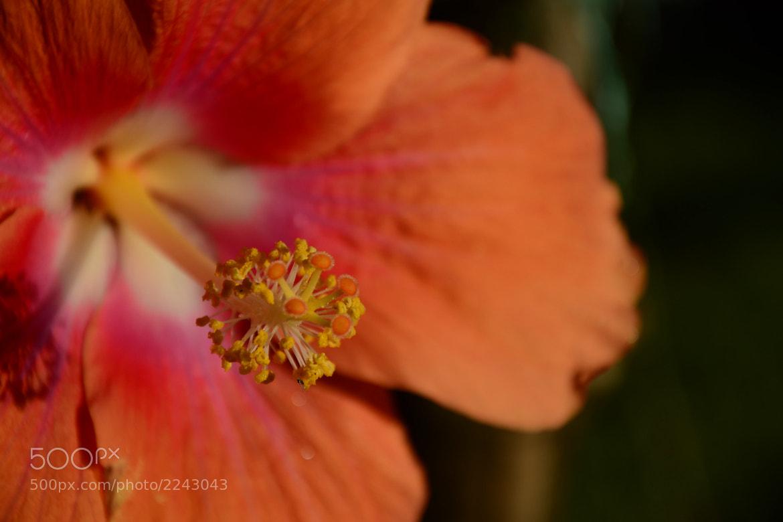 Photograph Fiery Flower by Soumya Dutta on 500px