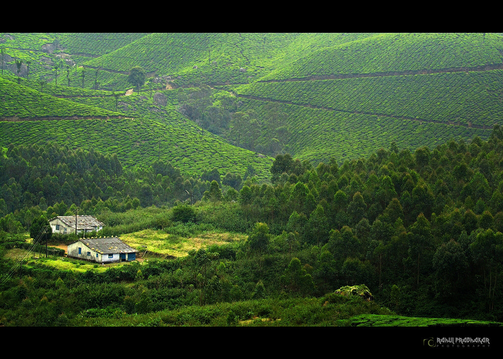 Photograph Magical munnar  by Rahul Prabhakar on 500px