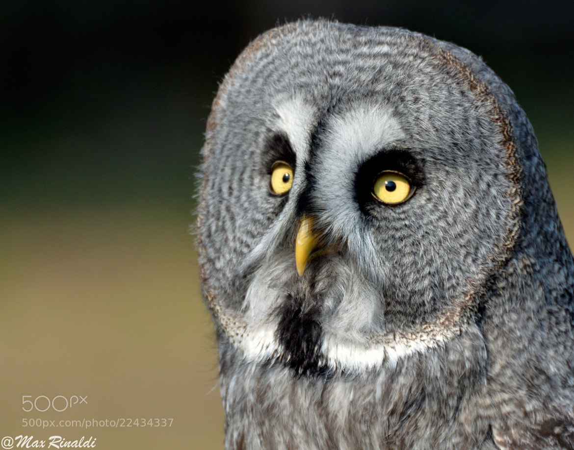 Photograph Eyes by Max Rinaldi on 500px