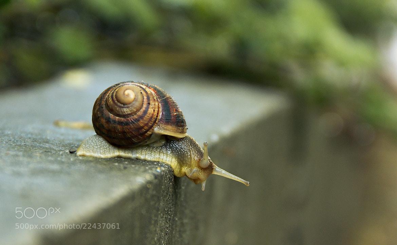 Photograph  cochlea  by Jenya Roslakov on 500px