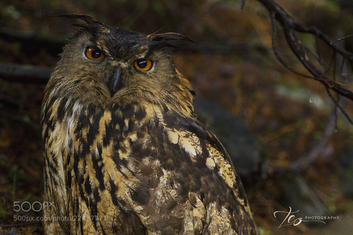 Photograph Angry Bird by Lars Hellebø (Teo) on 500px