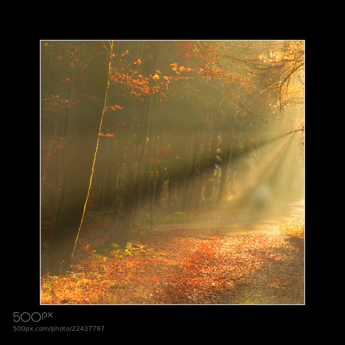 Photograph Forest - sunlit trees by EWA CIEBIERA on 500px