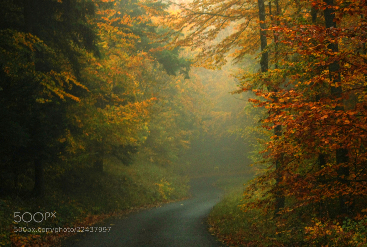 Photograph Misty drive by EWA CIEBIERA on 500px