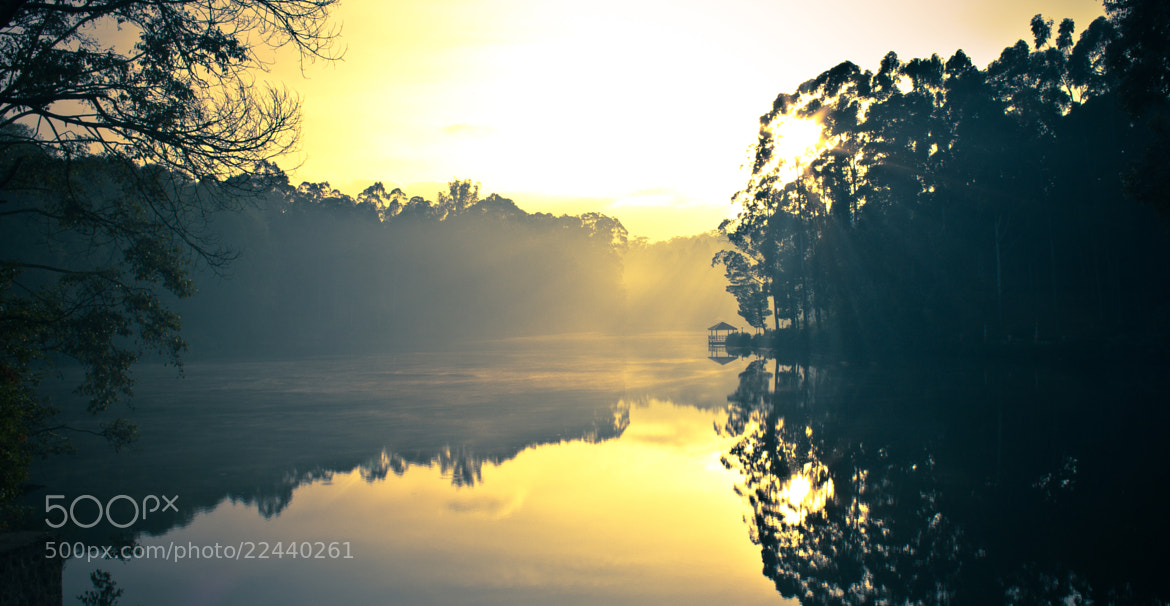 Photograph A misty morning by ARITRA SEN on 500px