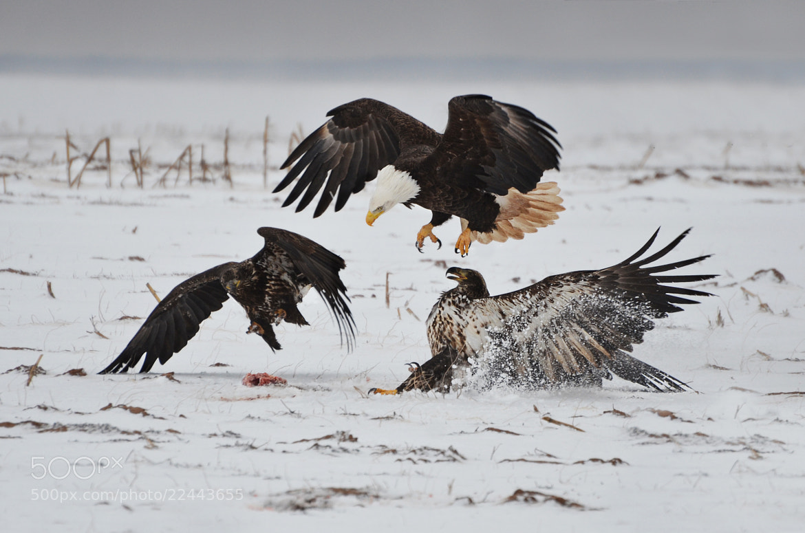 "Photograph ""Angry Birds"" by Peter Brannon on 500px"