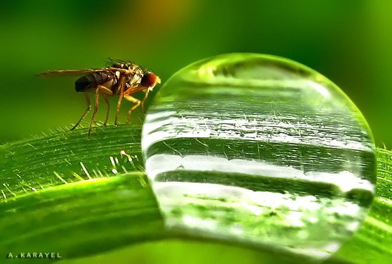 Photograph life in a drop of water by karayelim on 500px