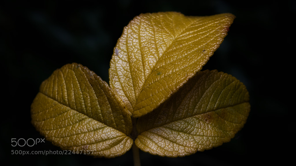 Photograph Autumn colours by Chris Coram on 500px