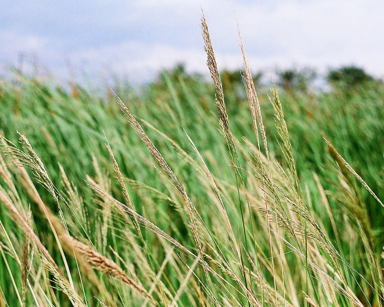 Photograph GRASS by Siripong Travels on 500px