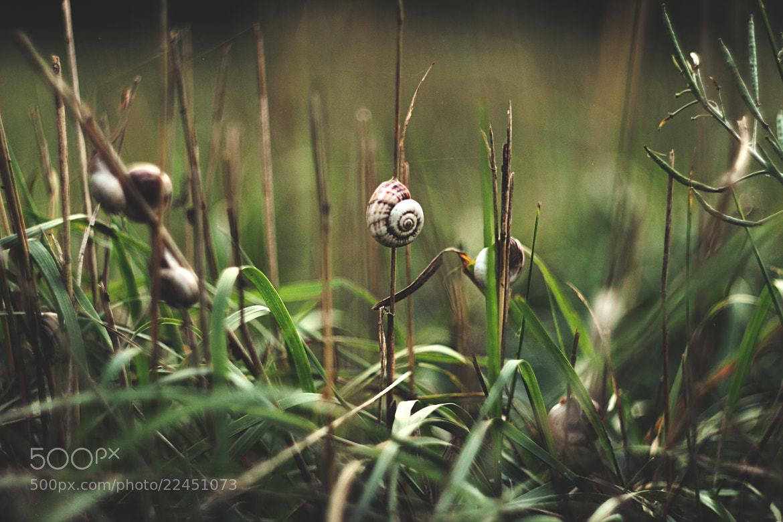 Photograph Green Grass by Tolik Golub' on 500px