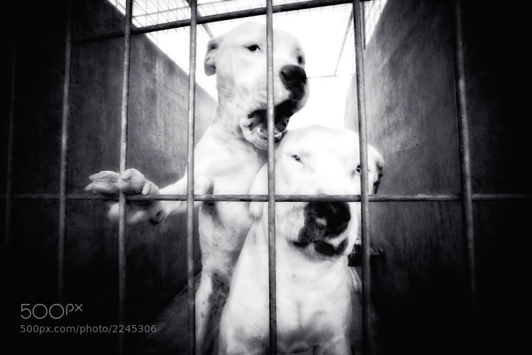 Photograph shelter dog, no name, no9 by Susan Sabo on 500px