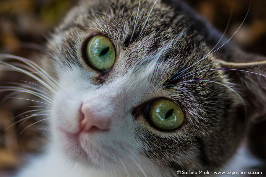 Photograph I'm watching you by Stefano Mioli on 500px