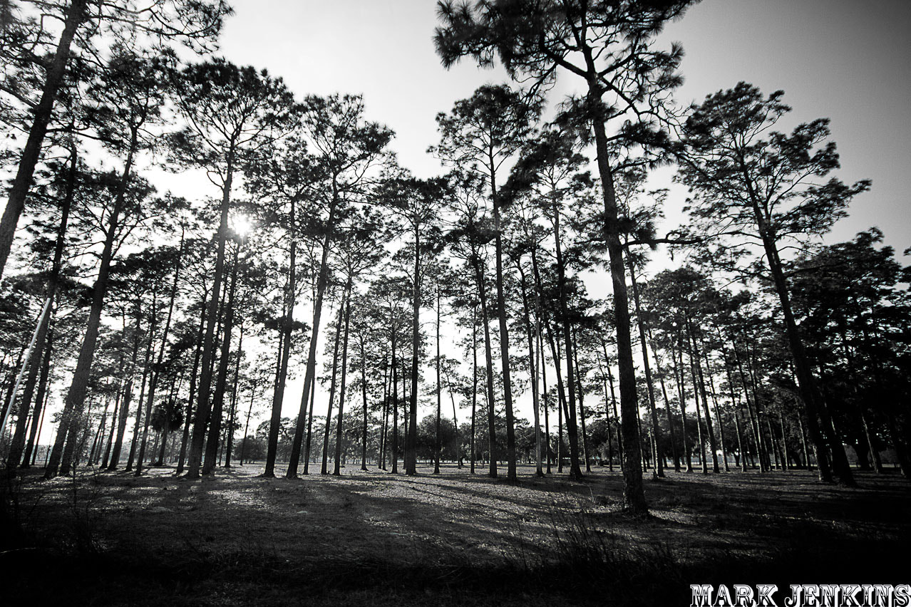Photograph TALL trees by Mark Jenkins on 500px