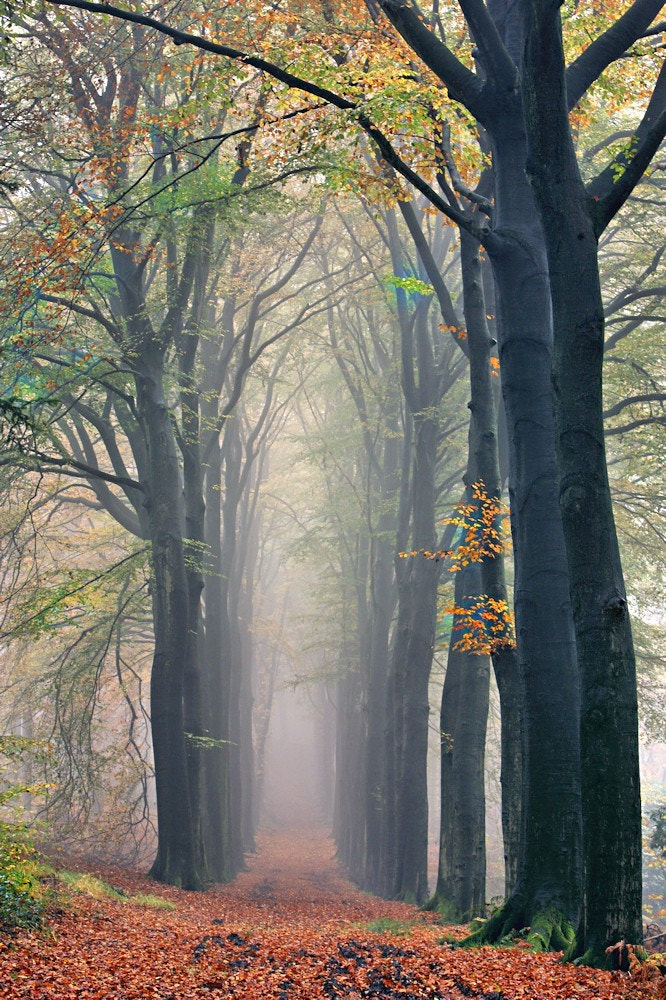 Photograph Autumn  by Ron  on 500px