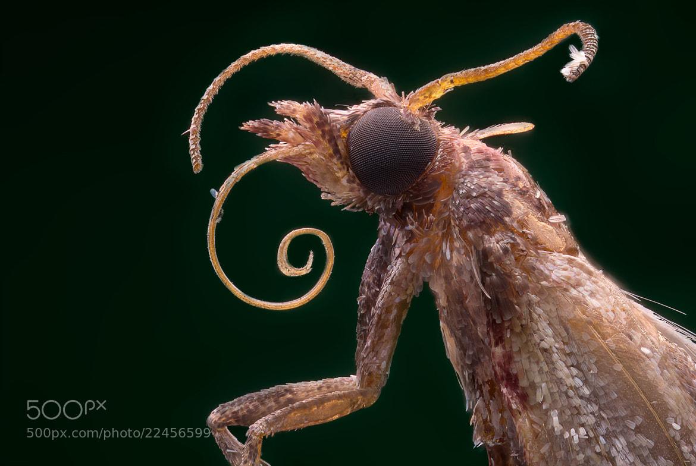 Photograph Moth by Vasily Menshov on 500px