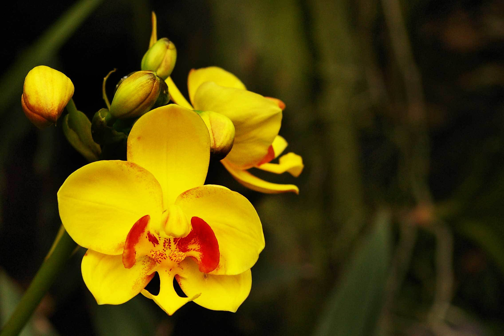 Photograph Orchid by Sivakumar Gopalakrishnan on 500px