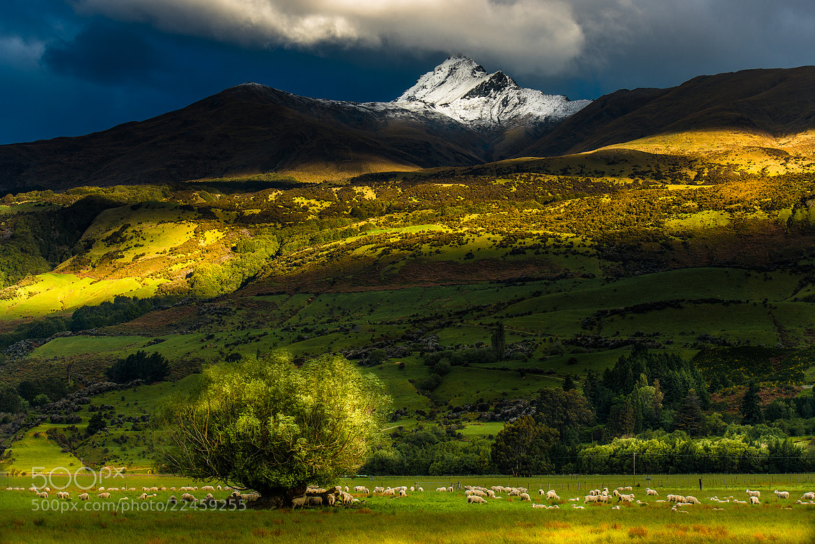 Photograph New Zealand field by Coolbiere. A. on 500px