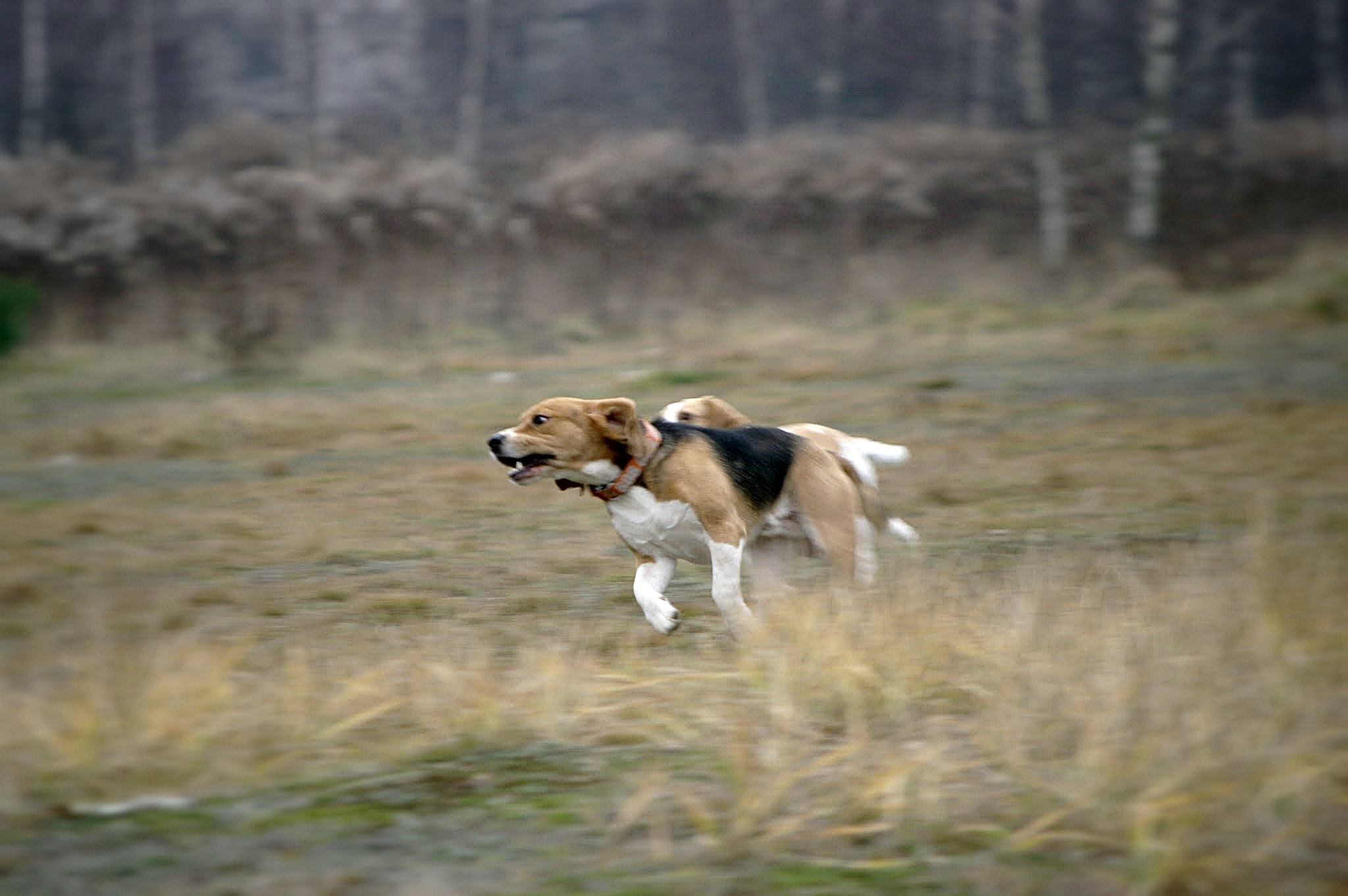 Photograph Run dog! Run! by Marta Węgierska on 500px