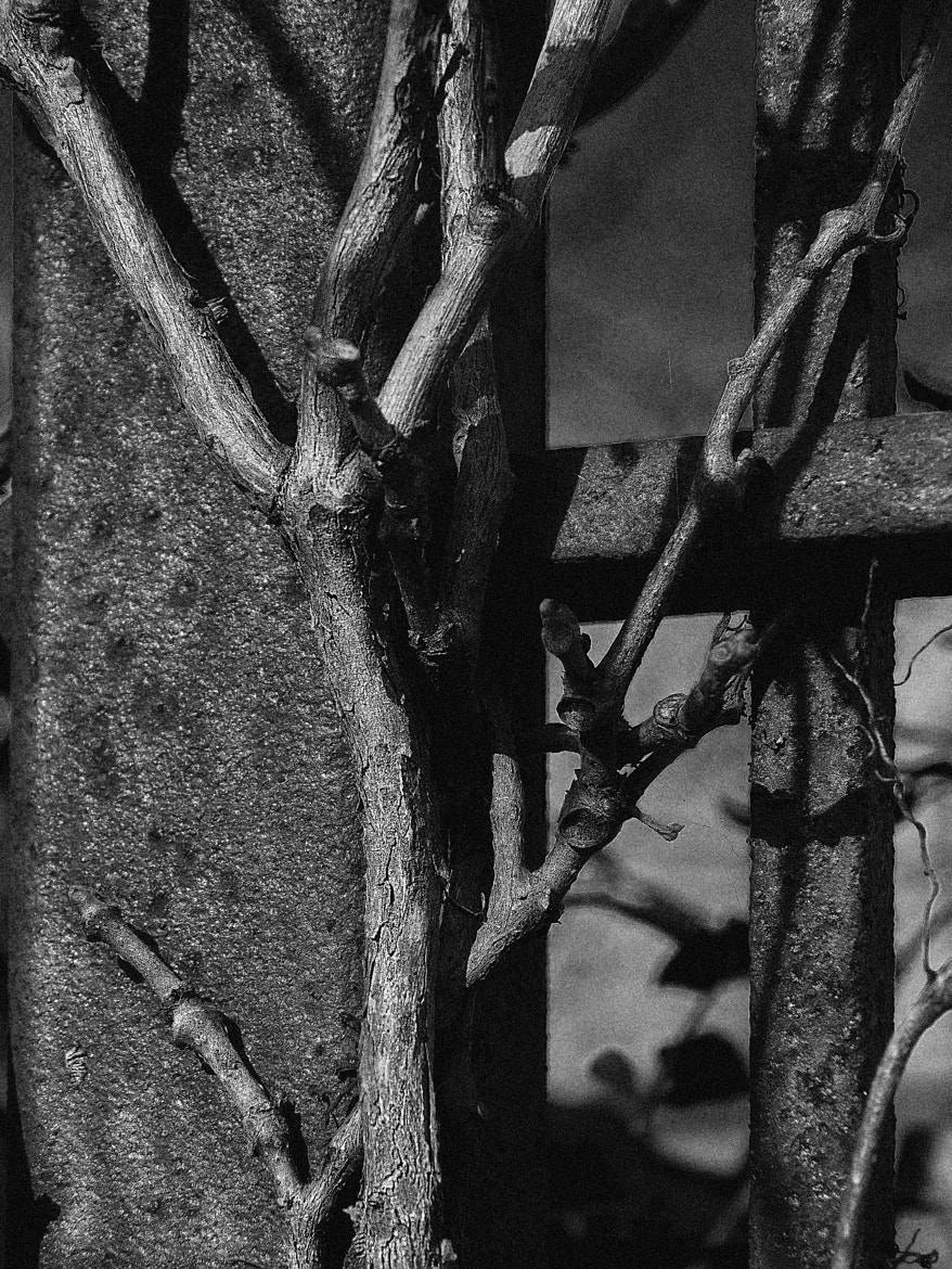 Photograph Vines on Rusty Fence by Kevin Shorter on 500px