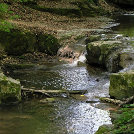 cold forest brook