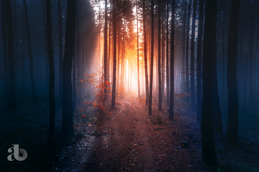 Magic Forest de Adnan Bubalo sur 500px.com