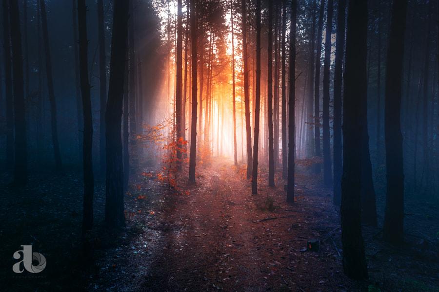 Magic Forest by Adnan Bubalo on 500px.com